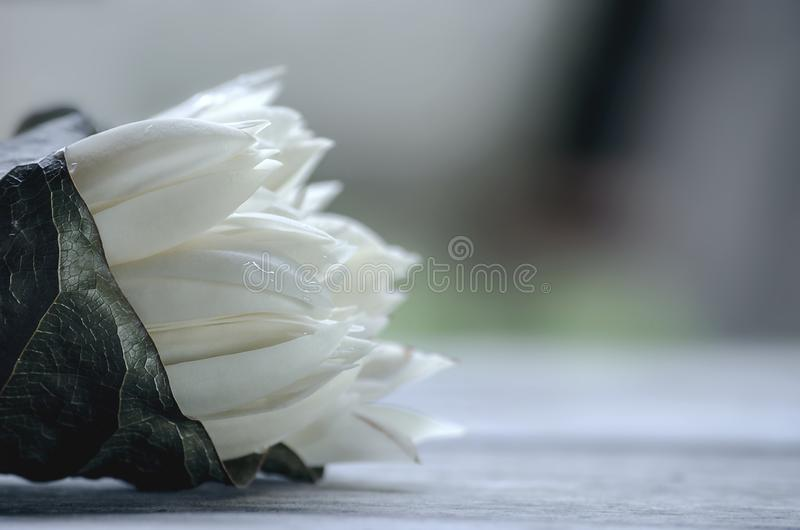 White Champaka flower Bouquet or Michelia alba. have smells aroma Placed on the old wooden floor.  stock image
