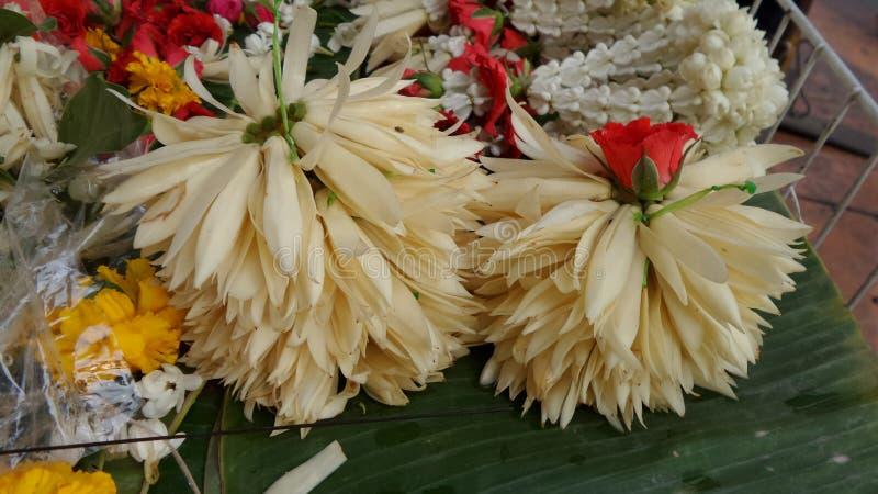 White Champaka Garland Fragrant Flowers For Garland Stock Image ...