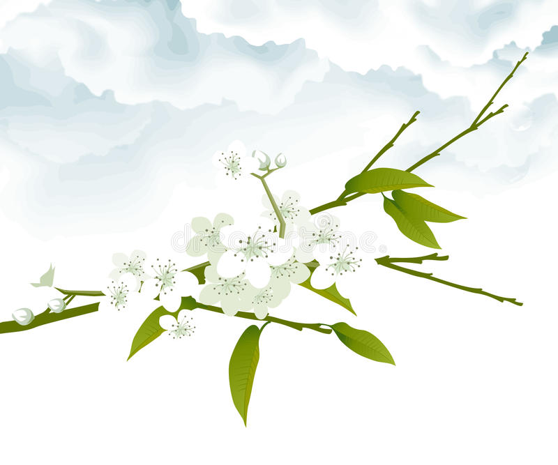 Download White Cherry Blossoms Stock Photos - Image: 9754773