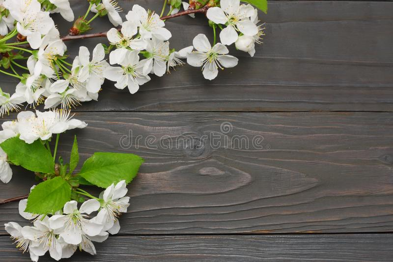 white cherry blossoms on dark wooden background. top view stock photos