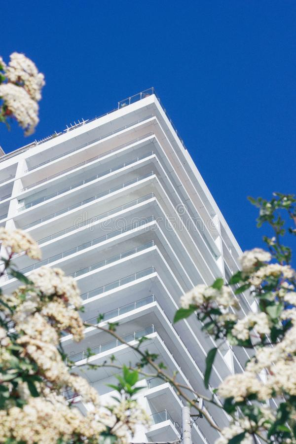 White Cherry Blossoms Beside High-rise Building royalty free stock photos