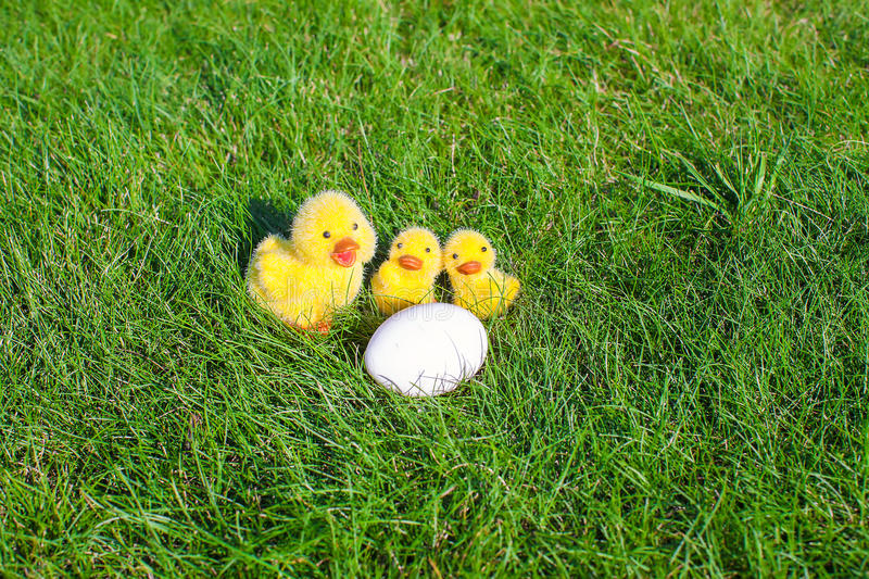 White chicken egg and yellow chickens in green stock photos