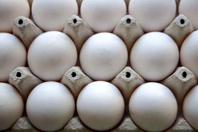 White chicken eggs carton tray pattern royalty free stock photos