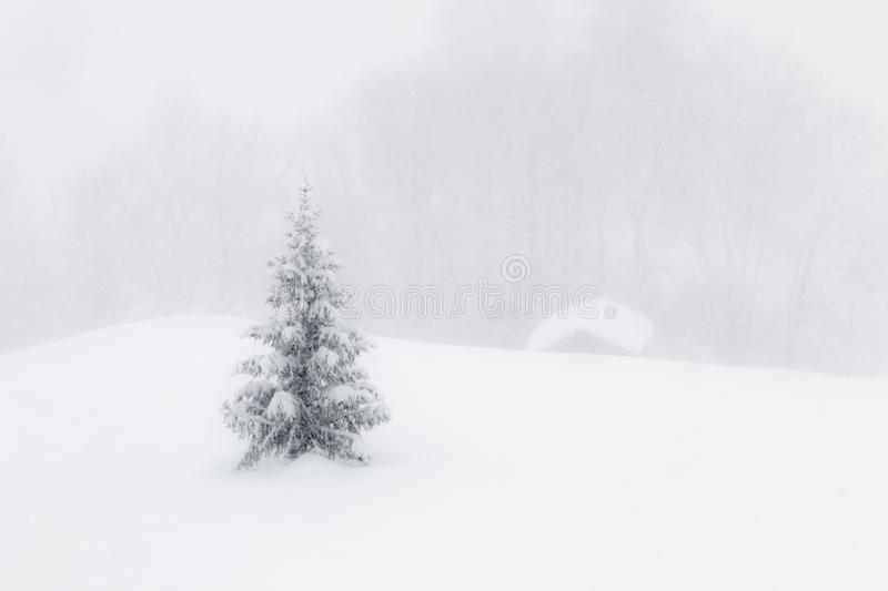 White christmas tree in the snow. Low contrast photo of a Christmas tree in a snowy landscape stock photo