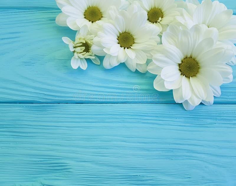 White chrysanthemum design birthday bloom on blue wooden floral. White chrysanthemum on blue wooden birthday floral bloom design royalty free stock photos