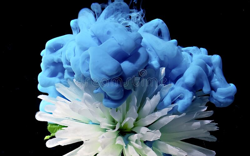 White chrysanthemum flower on a fantastic background stock photography