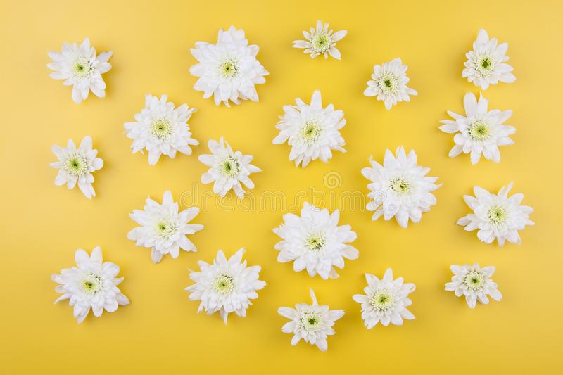 White chrysanthemum isolated. On yellow background royalty free stock images