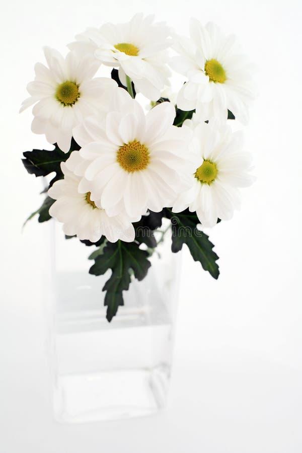 Free White Chrysanthemums Royalty Free Stock Image - 13589096