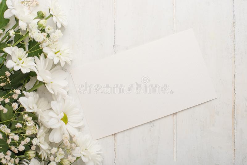 White chrysanthemums on a white wooden background, with empty space for writing or advertising royalty free stock photo