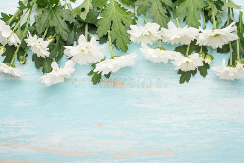White chrysanthemums on a wooden background, top view, with empty space for writing or advertising royalty free stock photography