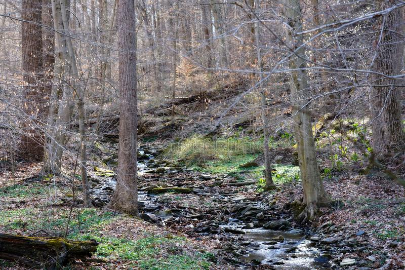 White Clay Creek in Delaware. Photo of a small portion White Clay Creek in Delaware stock images