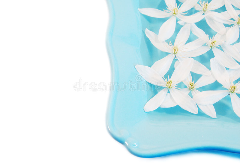 White Clematis royalty free stock image