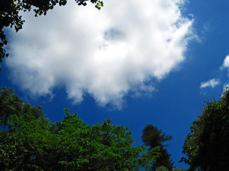 WHITE CLOUD IN BLUE SKY OVER PARK. View of white cloud in a blue sky over green tree tops in a park royalty free stock image