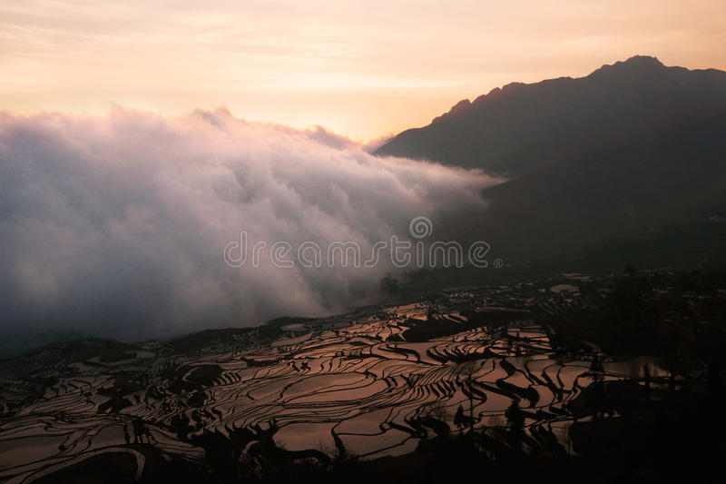 White cloud of mist entering and covering a rice field landscape in a valley between mountains at sunset. White cloud of mist that looks like smoke entering and royalty free stock photography