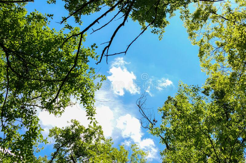Blue skies over the forest. White clouds in a blue sky float over the tree tops on a beautiful summer day royalty free stock photography