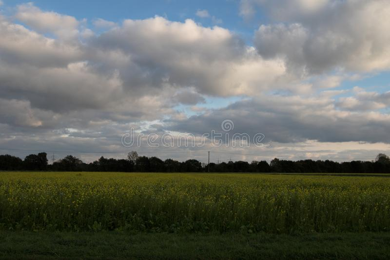 White clouds and blue sky over a field with the forest in the horizon in geeste emsland germany. Photographed during a sightseeing tour in geeste emsland stock image