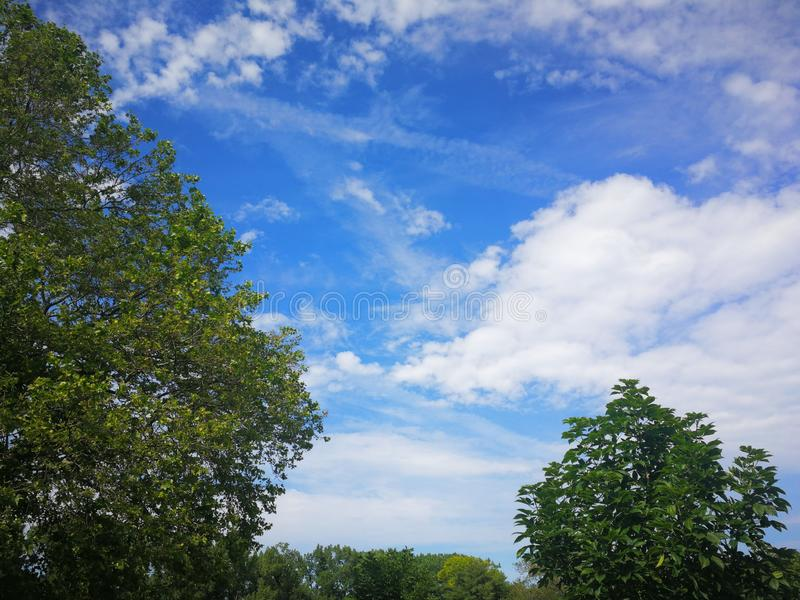 White clouds in blue sky over trees stock photography