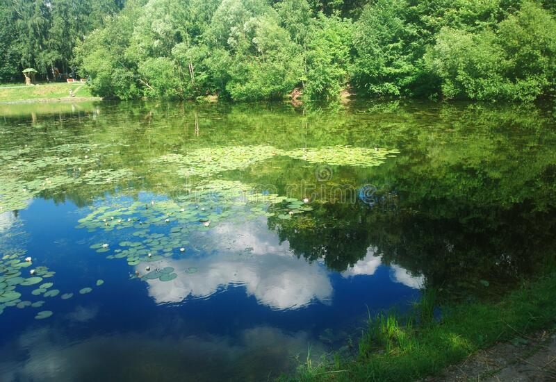 White clouds reflecting at the summer pond background stock photography