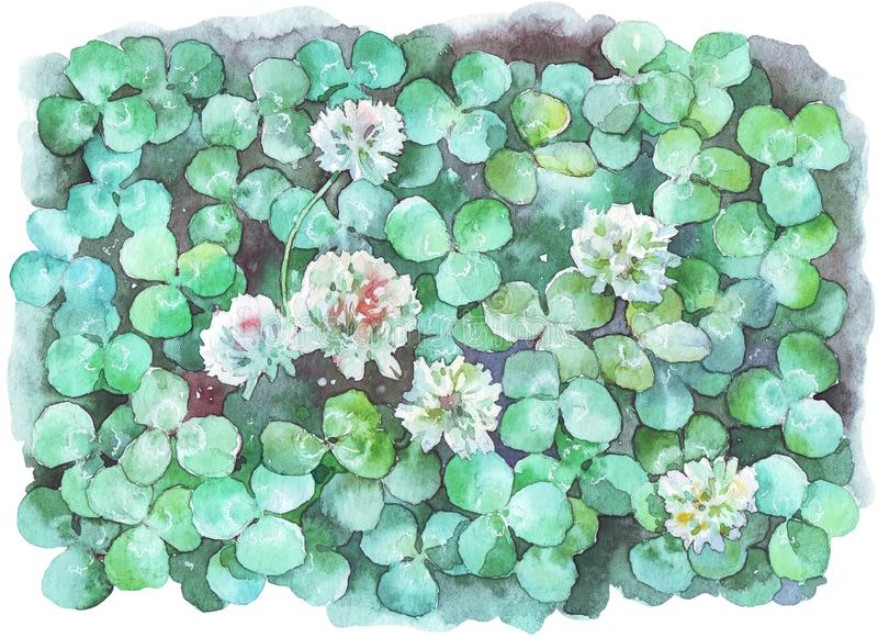 White clover field watercolor illustration. Hand painted stock illustration