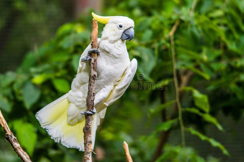 White Cockatoo In Tree Stock Photo