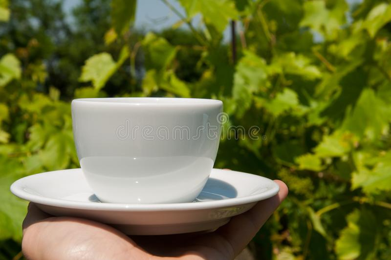 White coffee cup in hand in nature.Coffee time. Natural drink morning vintage breakfast mug hot table espresso wooden fresh aroma taste bean brown cafe closeup royalty free stock image