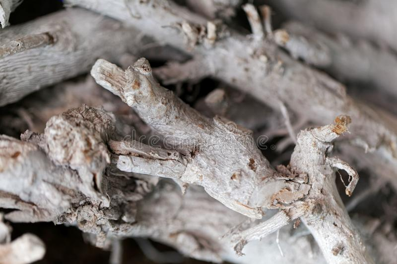 White colored branches royalty free stock images