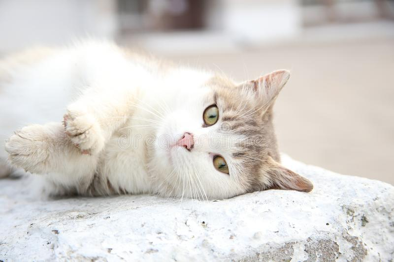 White cat laying on brightly lit concrete stock images