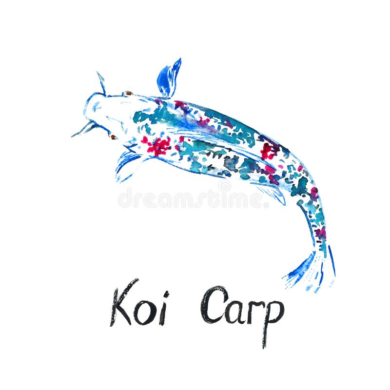 White colorful Koi carp, isolated on white hand painted watercolor illustration royalty free illustration