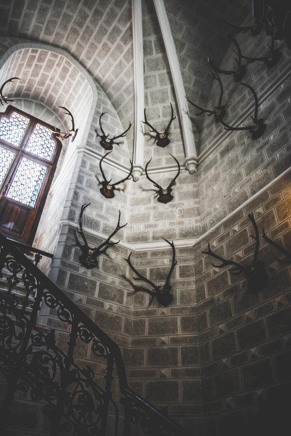 White Concrete Building Interior With Antlers Hanging stock photo