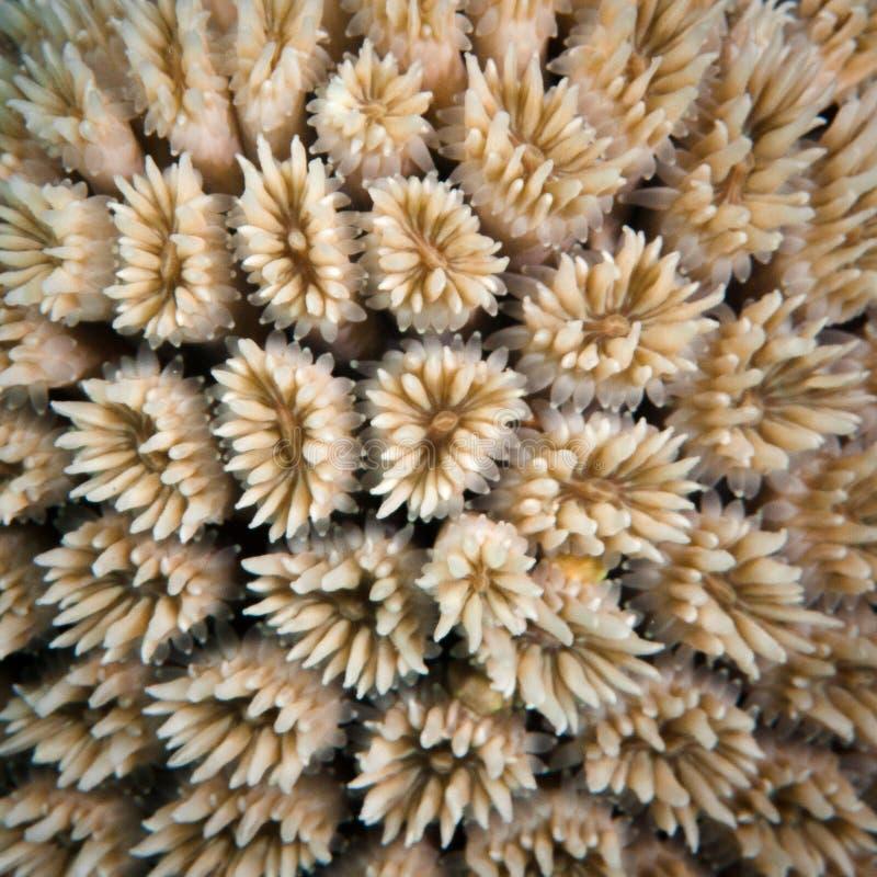 Free White Coral Polyps Stock Photos - 28415983
