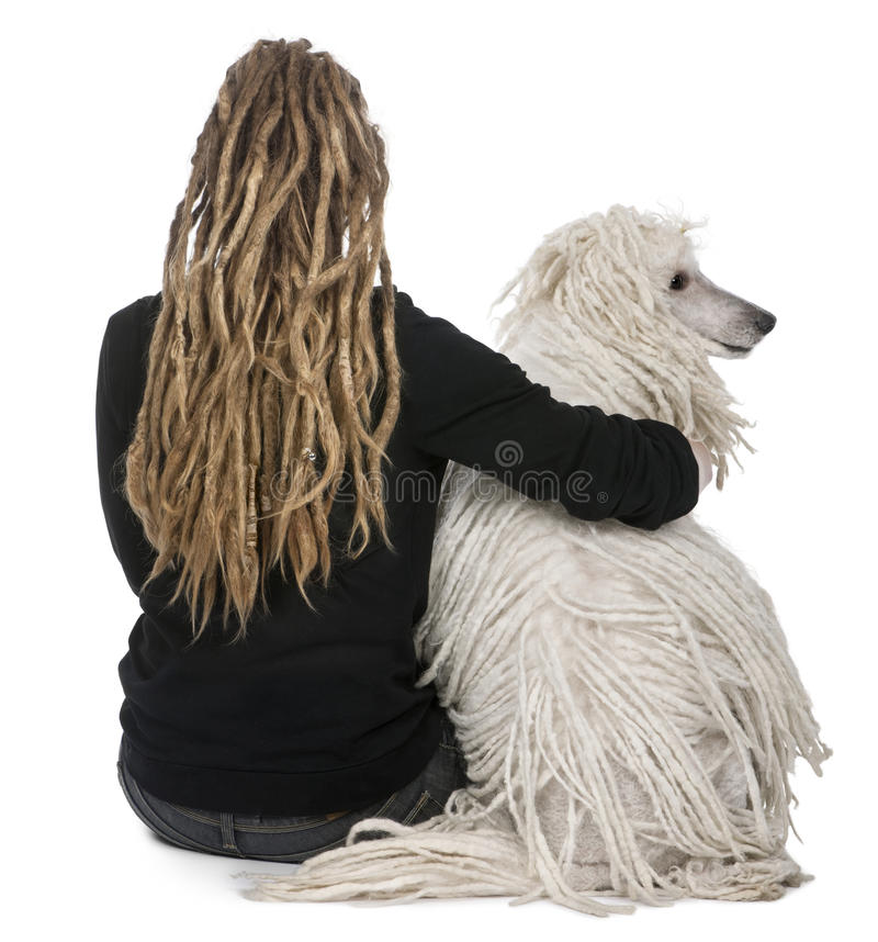 White Corded standard Poodle and a girl. Rear view of a White Corded standard Poodle and a girl with dreadlocks sitting in front of white background royalty free stock photo