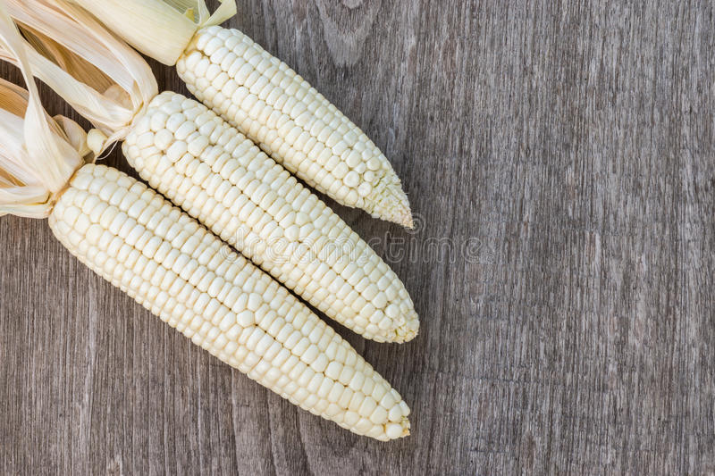 White corn royalty free stock images