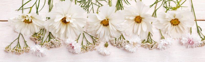 White cosmea cosmos flowers panoramic border, banner, wedding romantic background. Flat lay. stock photo
