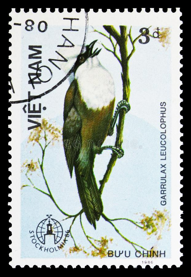 White-crested Laughingthrush (Garrulax leucolophus), Birds serie, circa 1986. MOSCOW, RUSSIA - SEPTEMBER 26, 2018: A stamp printed in Vietnam shows White-crested stock image