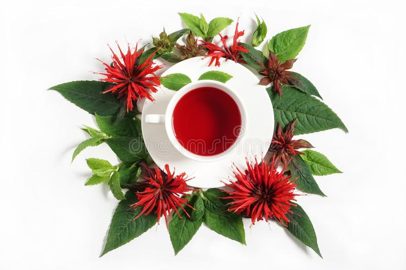 White cup of tea surrounded by the bergamot leaves and flowers stock photos