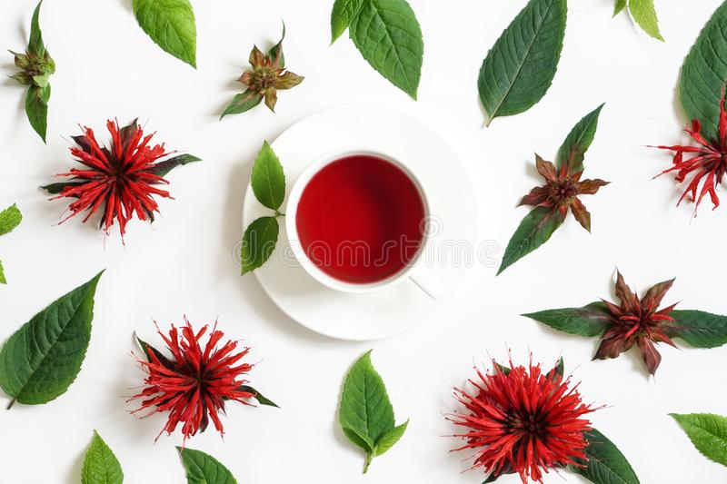 White cup of tea surrounded by the bergamot leaves and flowers royalty free stock image