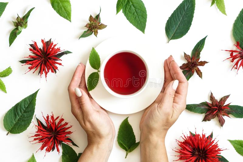 White cup of tea and woman s hands surrounded by the bergamot leaves and flowers stock image