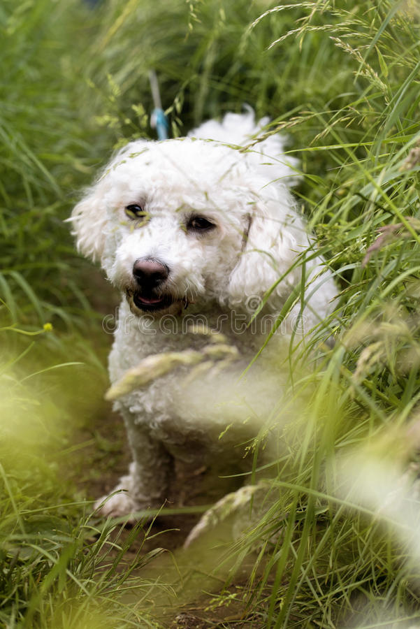 White cute dog into the grass royalty free stock image