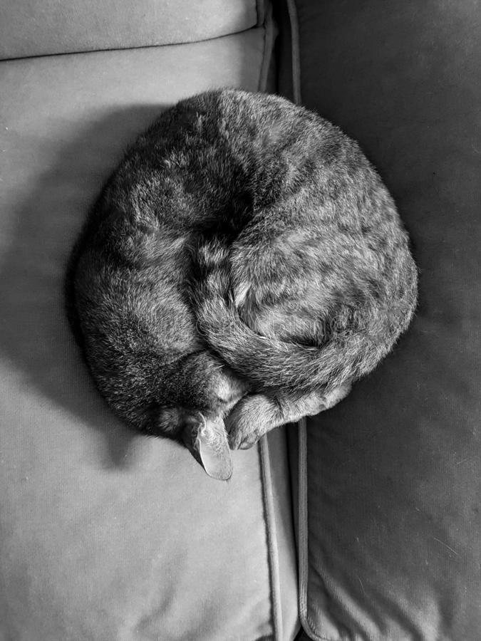 white czarnego kota Sypialny kot zdjęcia stock