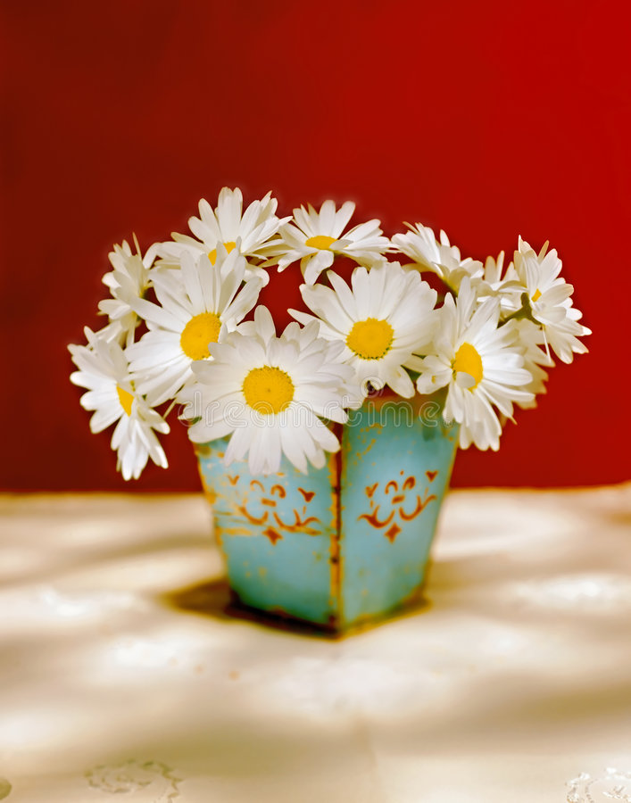 White Daisies Stock Photography