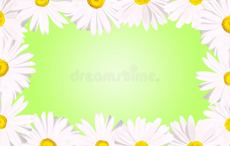 Download White Daisies Border Over Green Royalty Free Stock Photography - Image: 19266197