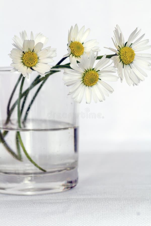 White Daisies In Glass Vase Free Public Domain Cc0 Image