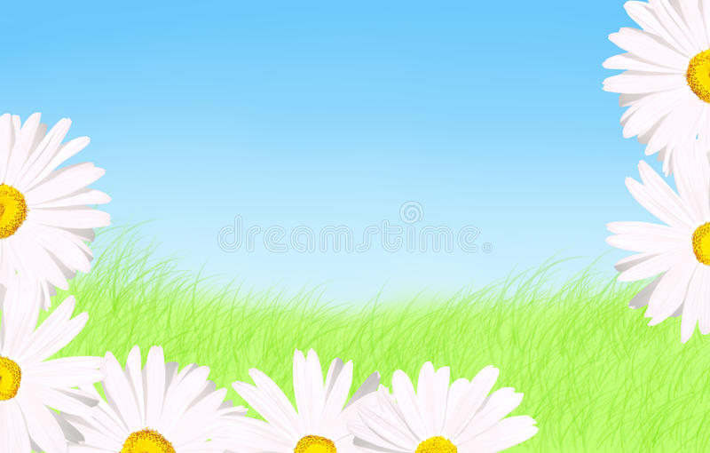 Download White Daisies Grass And Sky Background Stock Image - Image: 19267281