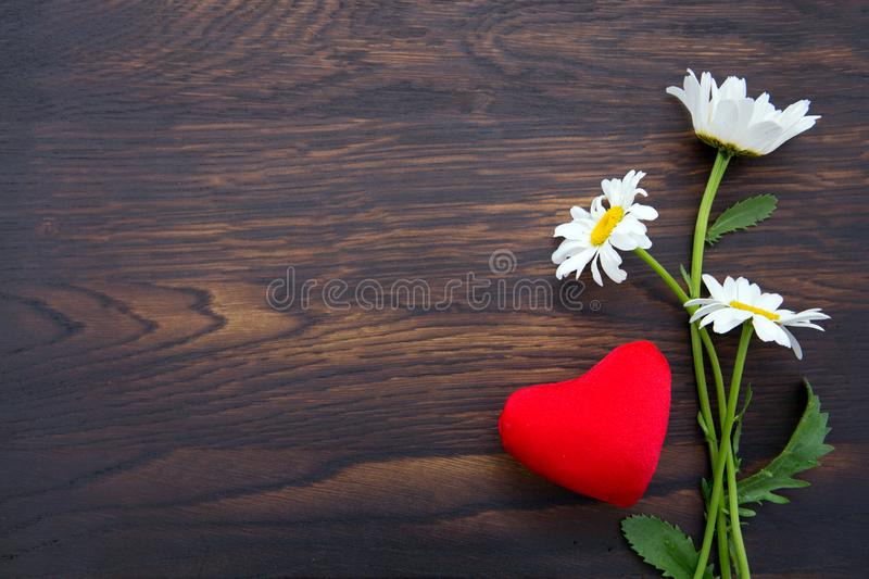 White daisies and red heart on brown wooden background. stock photo