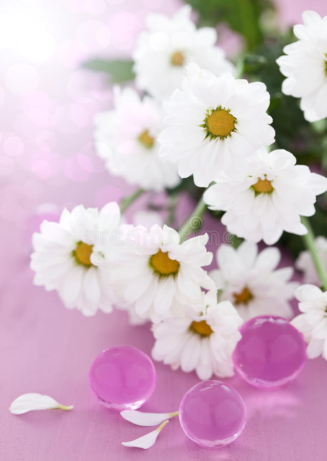 Download White daisy blossom stock image. Image of health, flower - 20136137