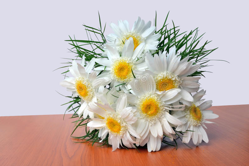 White daisy bouquet stock photography