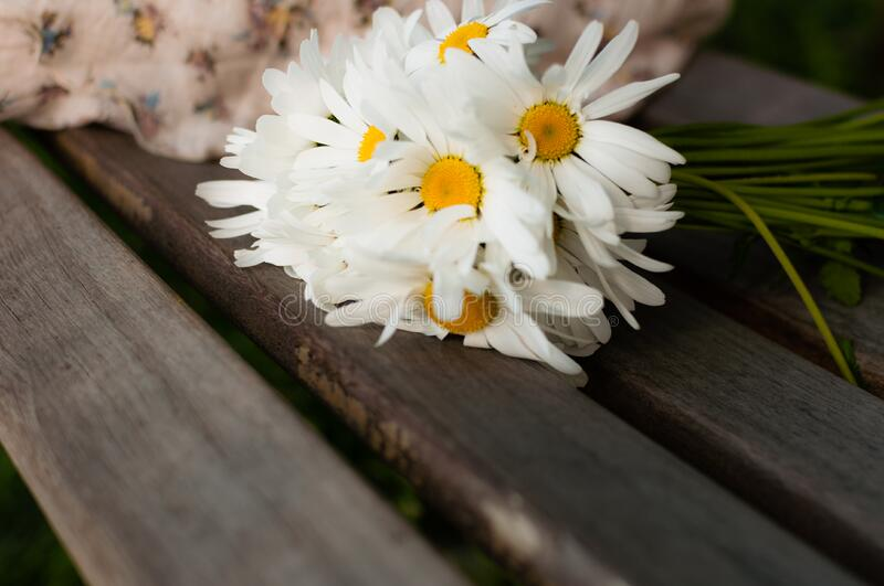 White Daisy on Brown Wood royalty free stock images
