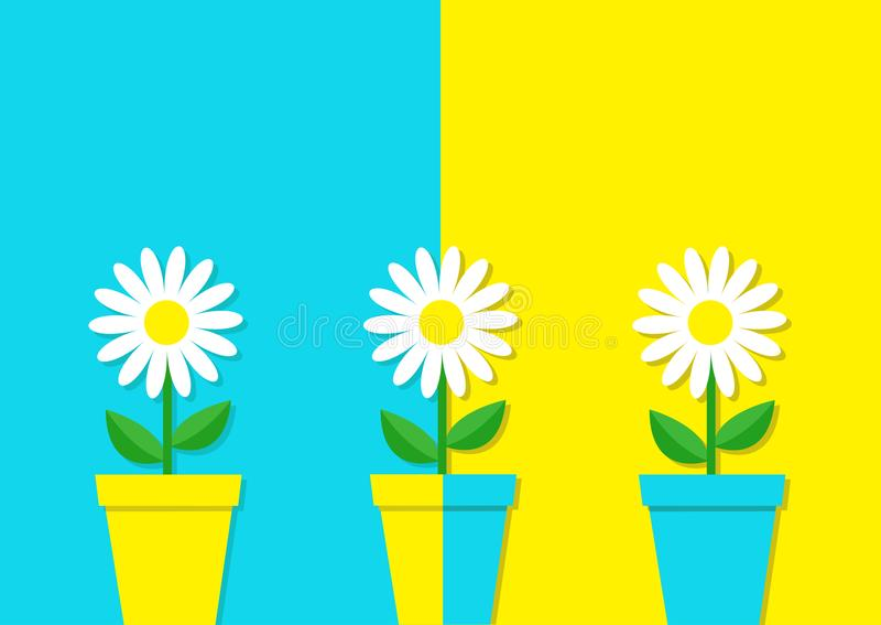White daisy chamomile icon. Three flower pot set. Cute plant collection. Love card. Camomile Growing concept. Flat design. Bright. Blue yellow colorful vector illustration