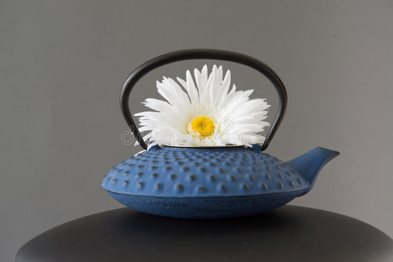 White Daisy Flower In Blue Tea Pot. Decorative artificial white daisy flower in blue fancy Japanese tea pot. Grey background stock images
