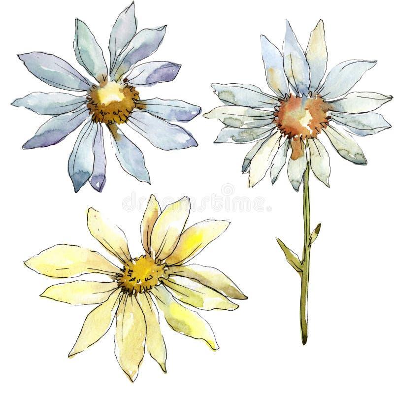 White daisy flower. Floral botanical flower. Isolated illustration element. Aquarelle wildflower for background, texture, wrapper pattern, frame or border vector illustration